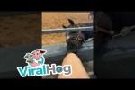 Video - Witziges Pferd