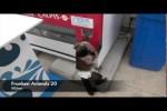 Video - Franken ANIMALS 20