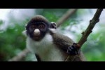 Video - Funny Talking Animals - Walk On The Wild Side (Englisch)