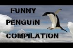 Video - Funny Antarctic Penguin Compilation