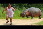 Video - Wenn Tiere Menschen Angst machen