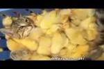 Video - Was Tiere So Denken 75