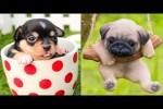 Video - Lustige Baby-Hunde
