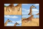 Spiel - Animal Puzzle