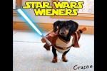 Video - Star Wars Dackel