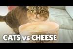 Video - Cats vs World's Stinkiest Cheese