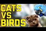 Video - Katzen gegen Vögel