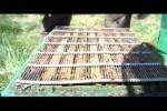 Video - Wie entsteht eigentlich Honig?
