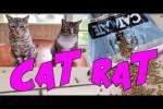 Video - Verräter-Katze