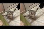 Video - Katze hängt an zwei Handtüchern fest
