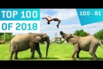 Video - Top 100 Viral Videos des Jahres 2018 - Teil 1