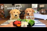 Video - Was gibt es hier zum Essen