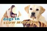 Video - Hunde in Zeitlupe