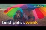 Video - die besten Tier-Videos der Woche