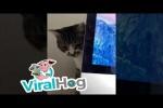 Video - Katze arbeitet mit