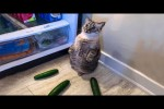 Video - Cats And Dogs In Funny Situations