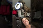 Video - Hungry Dog Dramatically Delivers Food Bowl
