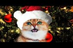 Video - Jingle Cats