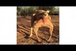 Video - Was Tiere So Denken 115