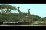 Video - FRANKEN ANIMALS 3
