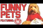 Video - Auch Tieren passieren lustige Hoppalas