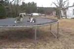 Video - der verrückte Hund mit den (leicht) genervten Katzen