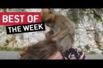Video - die besten Videos der 3. Januar-Woche