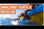 Video - Babyschildkröte von Netz befreit