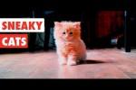 Video - Raffinierte Katzen