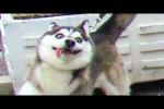 Video - Lustige Videos mit Katzen und Hunden
