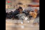 Video - Welpen und eine Katze