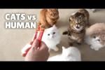 Video - Katzen gegen Mensch