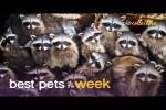 Video - Diese Tiere sind lustig
