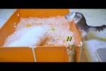 Video - Wie ein Winterhund den Sommer verbringt