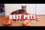 Video - Best Pets of the Week | March 2018 Week 3