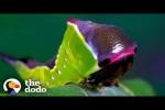 Video - Von der Raupe zum Schmetterling