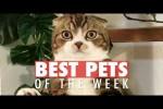 Video - Die lustigsten Tier-Videos der dritten Januar-Woche