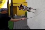 Video - Sportlicher Hund