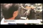 Video - FRANKEN ANIMALS 2