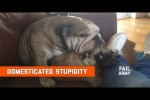 Video - Domesticated Stupidity (May 2020)