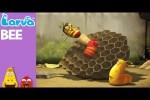 Video - Larva - Bee
