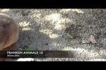 Video - FRANKEN ANIMALS 15