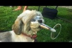 Video - Dogs And Cats In Funny Situations