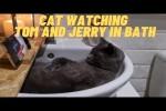 Video - Katze schaut Tom und Jerry im Waschbecken