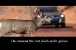 Video - Das Problem mit den Wildwechselschildern