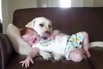 Video - warum jedes Baby einen Hund haben sollte