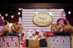 Video - Valentinstags-Hamsterdate