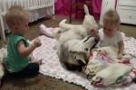 Video - Zwillinge und ein Hund
