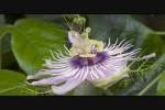 Video - Pflanzen - ein richtig schönes Natur-Video
