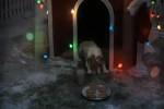 Video - Hunde-WeihnachtsTraum